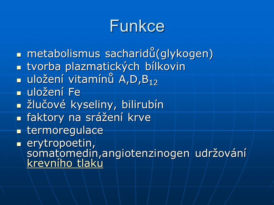 Funkce metabolismus sacharidů(glykogen) tvorba plazmatických bílkovin