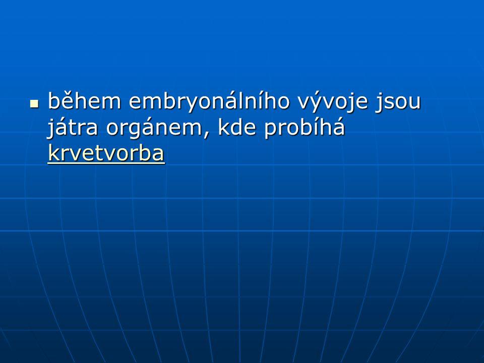 během embryonálního vývoje jsou játra orgánem, kde probíhá krvetvorba