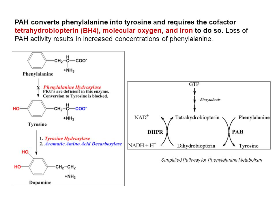 Simplified Pathway for Phenylalanine Metabolism