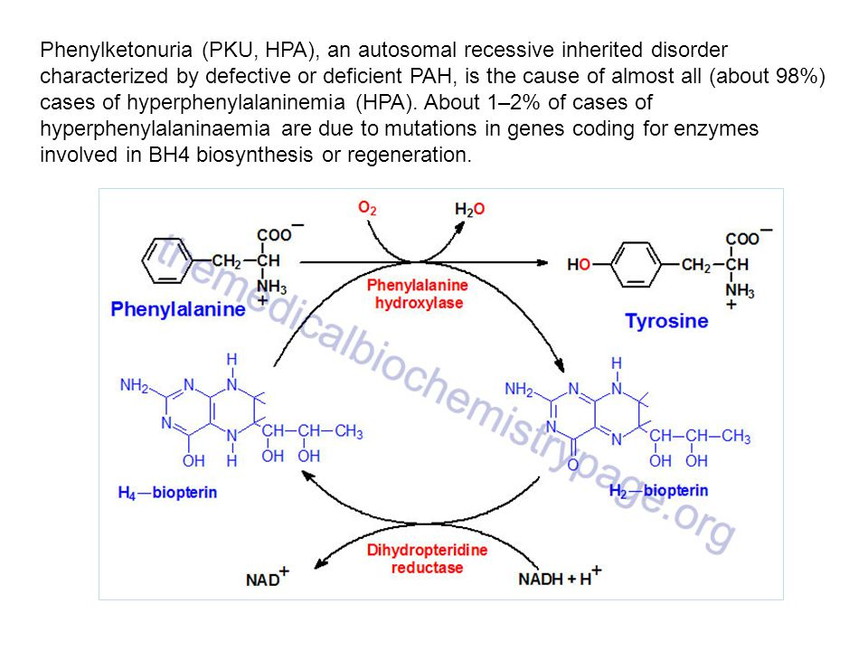 Phenylketonuria (PKU, HPA), an autosomal recessive inherited disorder characterized by defective or deficient PAH, is the cause of almost all (about 98%) cases of hyperphenylalaninemia (HPA). About 1–2% of cases of hyperphenylalaninaemia are due to mutations in genes coding for enzymes involved in BH4 biosynthesis or regeneration.