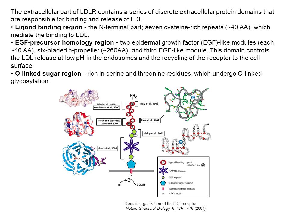 The extracellular part of LDLR contains a series of discrete extracellular protein domains that are responsible for binding and release of LDL.