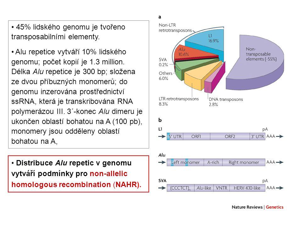 45% lidského genomu je tvořeno transposabilními elementy.