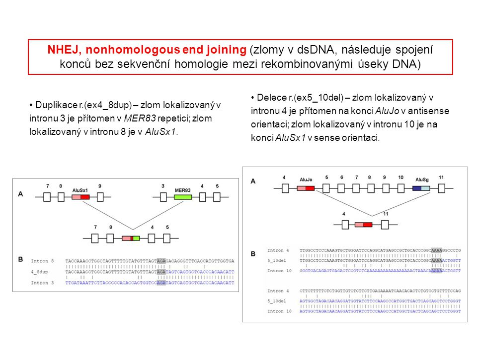 NHEJ, nonhomologous end joining (zlomy v dsDNA, následuje spojení konců bez sekvenční homologie mezi rekombinovanými úseky DNA)