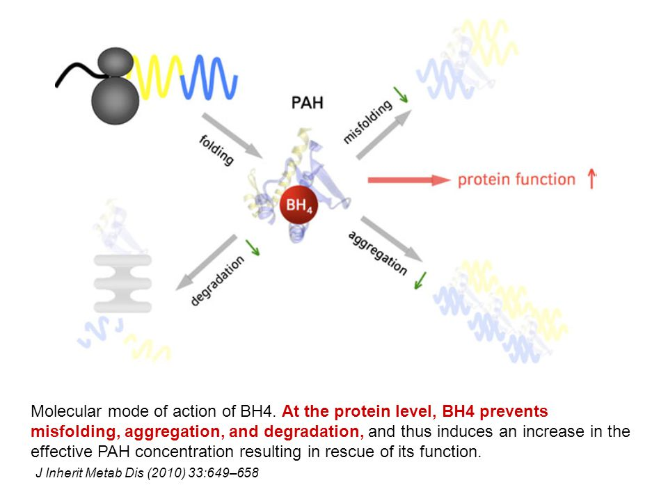 Molecular mode of action of BH4