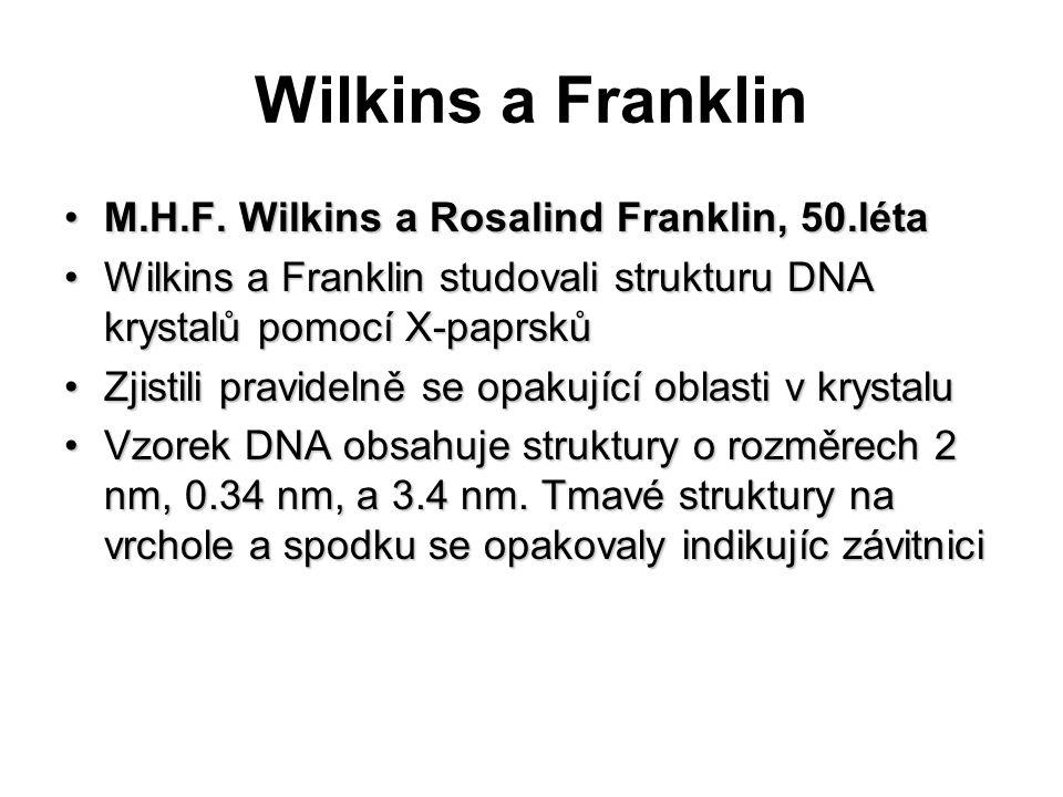 Wilkins a Franklin M.H.F. Wilkins a Rosalind Franklin, 50.léta