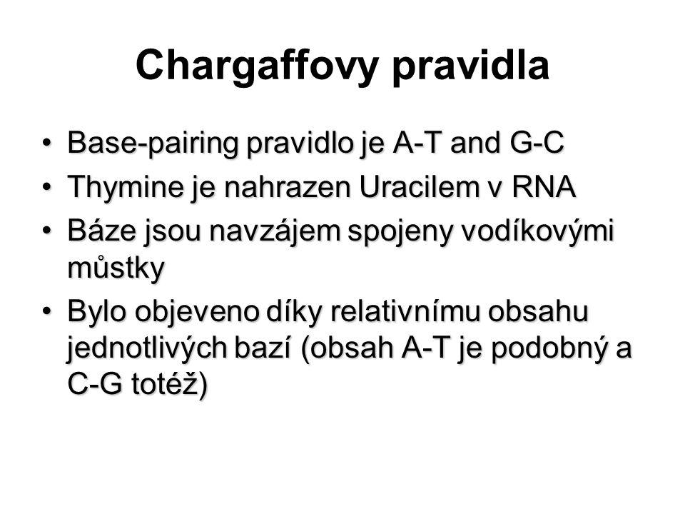 Chargaffovy pravidla Base-pairing pravidlo je A-T and G-C