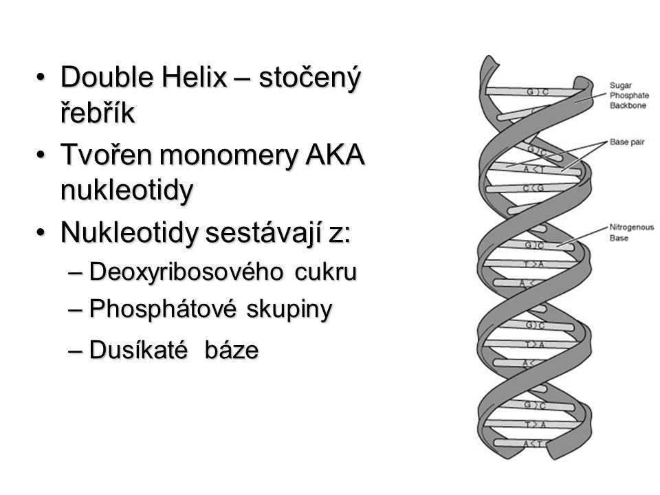 Double Helix – stočený řebřík Tvořen monomery AKA nukleotidy