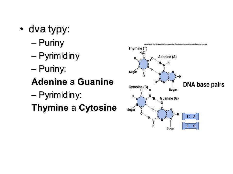 dva typy: Puriny Pyrimidiny Puriny: Adenine a Guanine Pyrimidiny: