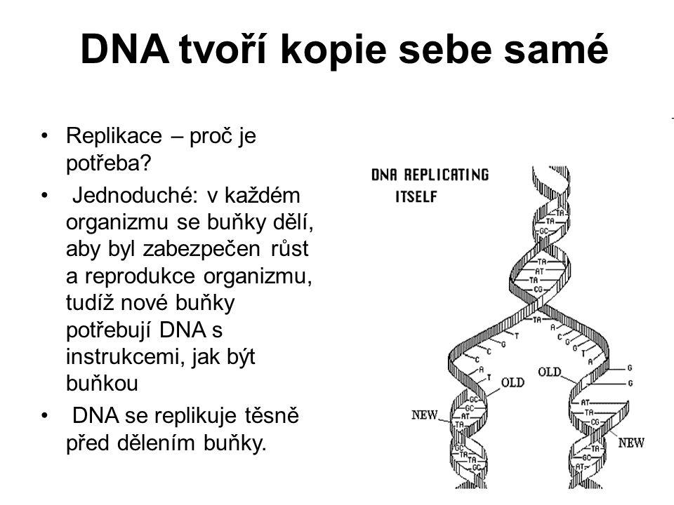 DNA tvoří kopie sebe samé