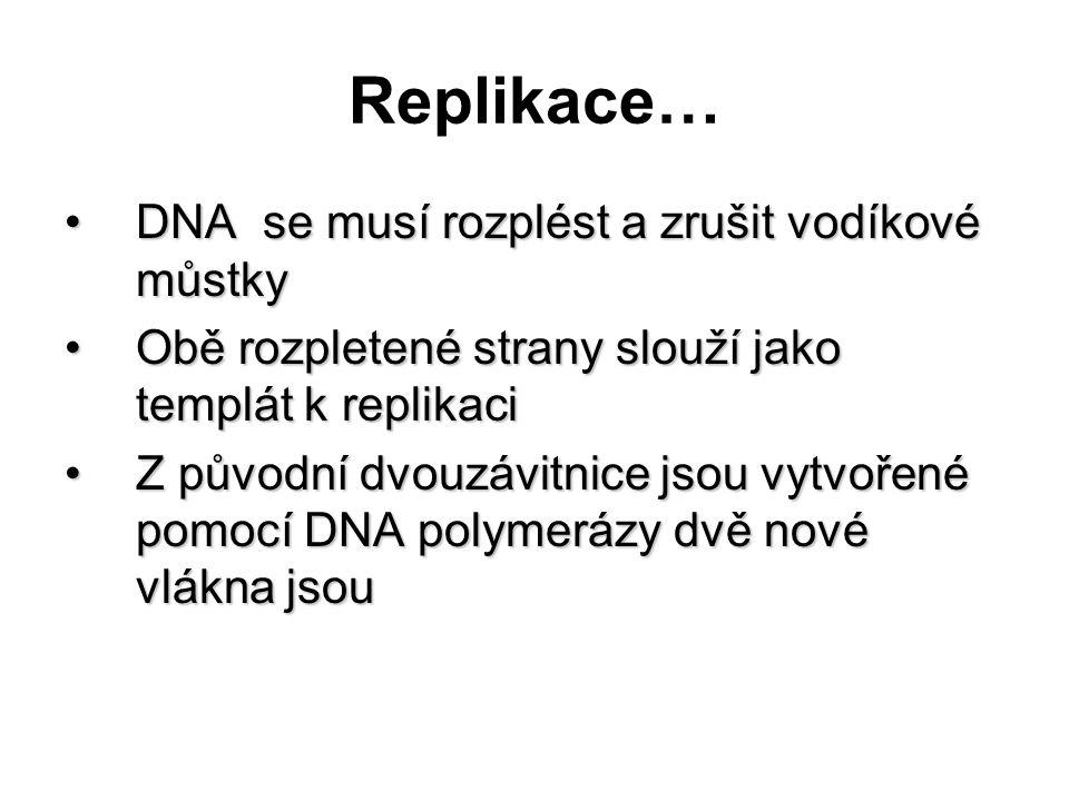 Replikace… DNA se musí rozplést a zrušit vodíkové můstky