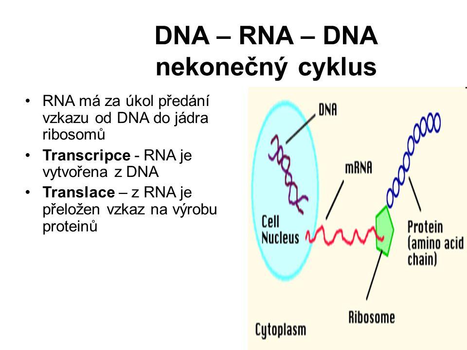 DNA – RNA – DNA nekonečný cyklus