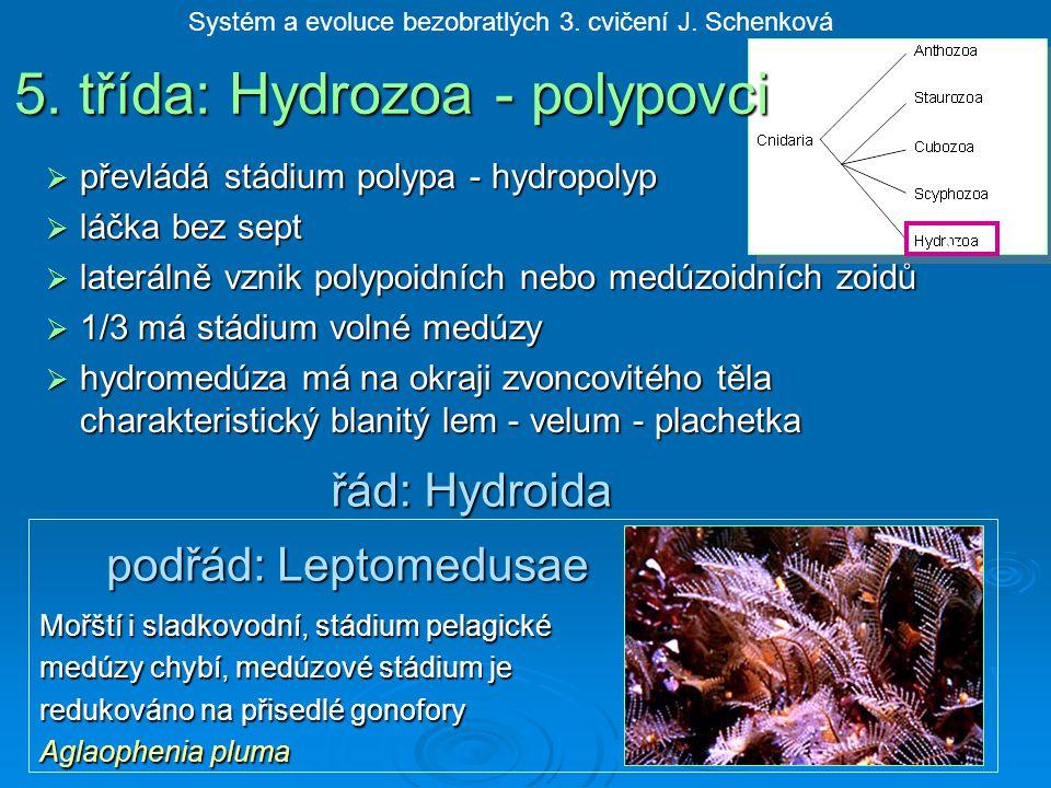 5. třída: Hydrozoa - polypovci