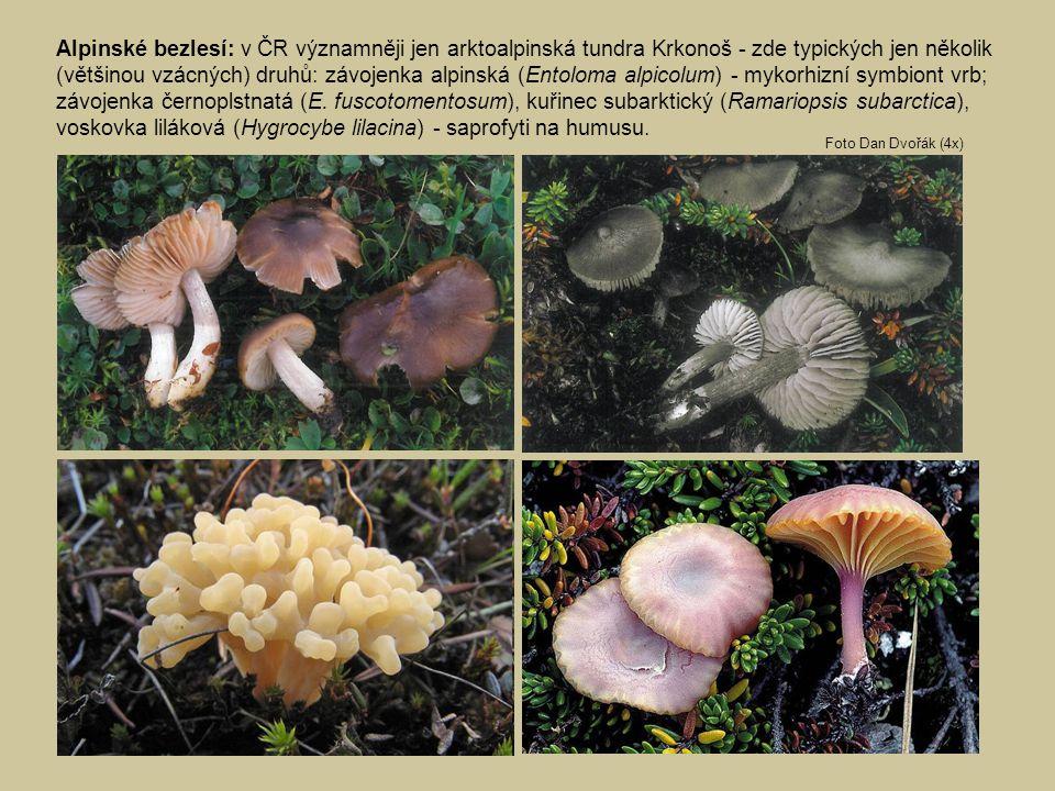 Alpinské bezlesí: v ČR významněji jen arktoalpinská tundra Krkonoš - zde typických jen několik (většinou vzácných) druhů: závojenka alpinská (Entoloma alpicolum) - mykorhizní symbiont vrb; závojenka černoplstnatá (E. fuscotomentosum), kuřinec subarktický (Ramariopsis subarctica), voskovka liláková (Hygrocybe lilacina) - saprofyti na humusu.