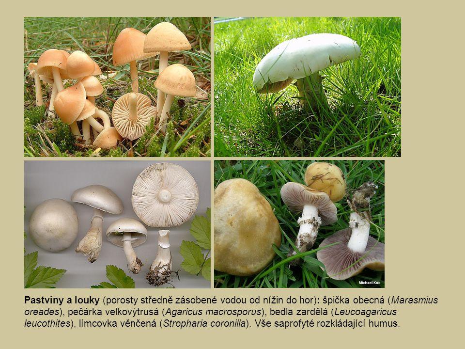 Pastviny a louky (porosty středně zásobené vodou od nížin do hor): špička obecná (Marasmius oreades), pečárka velkovýtrusá (Agaricus macrosporus), bedla zardělá (Leucoagaricus leucothites), límcovka věnčená (Stropharia coronilla).