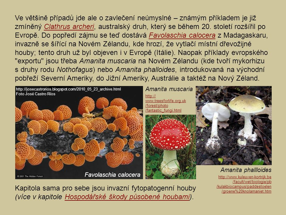 Ve většině případů jde ale o zavlečení neúmyslné – známým příkladem je již zmíněný Clathrus archeri, australský druh, který se během 20. století rozšířil po Evropě. Do popředí zájmu se teď dostává Favolaschia calocera z Madagaskaru, invazně se šířící na Novém Zélandu, kde hrozí, že vytlačí místní dřevožijné houby; tento druh už byl objeven i v Evropě (Itálie). Naopak příklady evropského exportu jsou třeba Amanita muscaria na Novém Zélandu (kde tvoří mykorhizu s druhy rodu Nothofagus) nebo Amanita phalloides, introdukovaná na východní pobřeží Severní Ameriky, do Jižní Ameriky, Austrálie a taktéž na Nový Zéland.