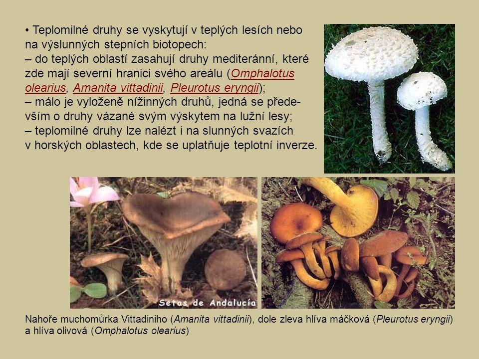 • Teplomilné druhy se vyskytují v teplých lesích nebo na výslunných stepních biotopech: – do teplých oblastí zasahují druhy mediteránní, které zde mají severní hranici svého areálu (Omphalotus olearius, Amanita vittadinii, Pleurotus eryngii); – málo je vyloženě nížinných druhů, jedná se přede-vším o druhy vázané svým výskytem na lužní lesy; – teplomilné druhy lze nalézt i na slunných svazích v horských oblastech, kde se uplatňuje teplotní inverze.