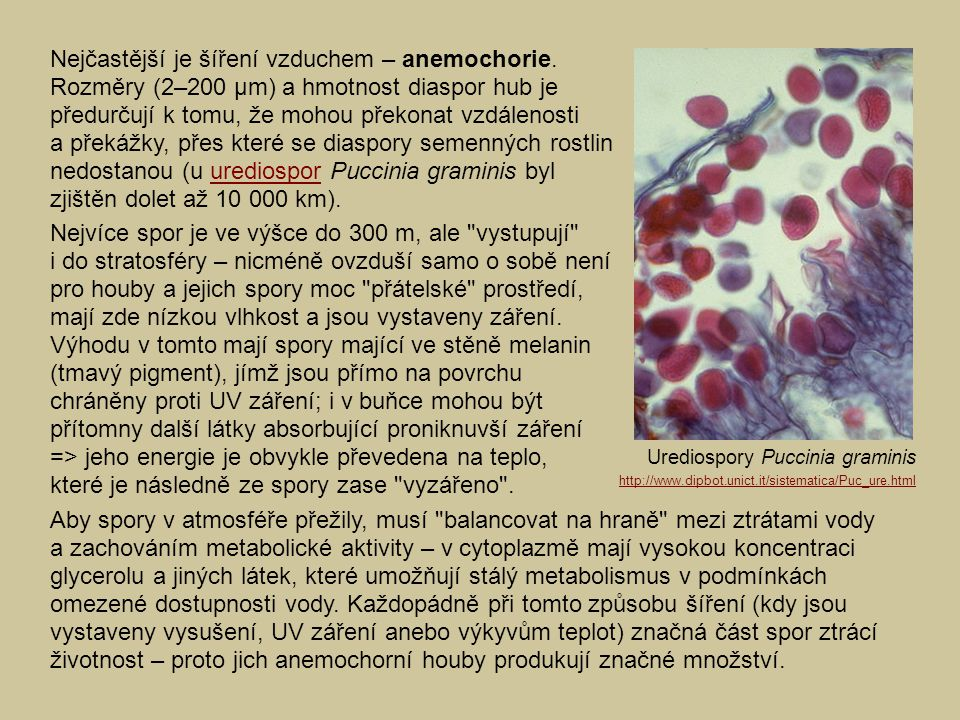 Nejčastější je šíření vzduchem – anemochorie.