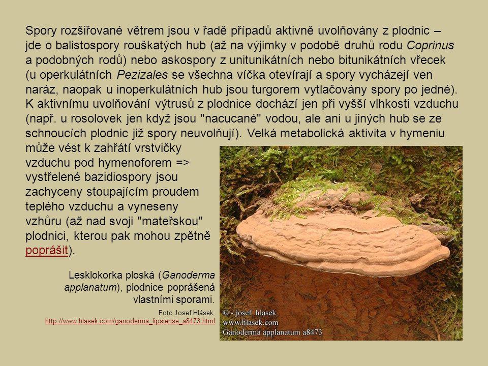 vzduchu pod hymenoforem => vystřelené bazidiospory jsou