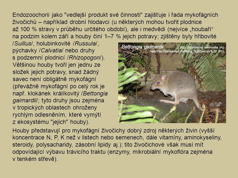 /Suillus/, holubinkovité /Russula/, pýchavky /Calvatia/ nebo druhy