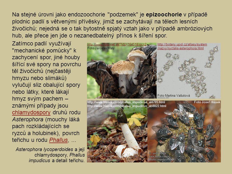 Na stejné úrovni jako endozoochorie podzemek je epizoochorie v případě plodnic padlí s větvenými přívěsky, jimiž se zachytávají na tělech lesních živočichů; nejedná se o tak bytostně spjatý vztah jako v případě ambróziových hub, ale přece jen jde o nezanedbatelný přínos k šíření spor.