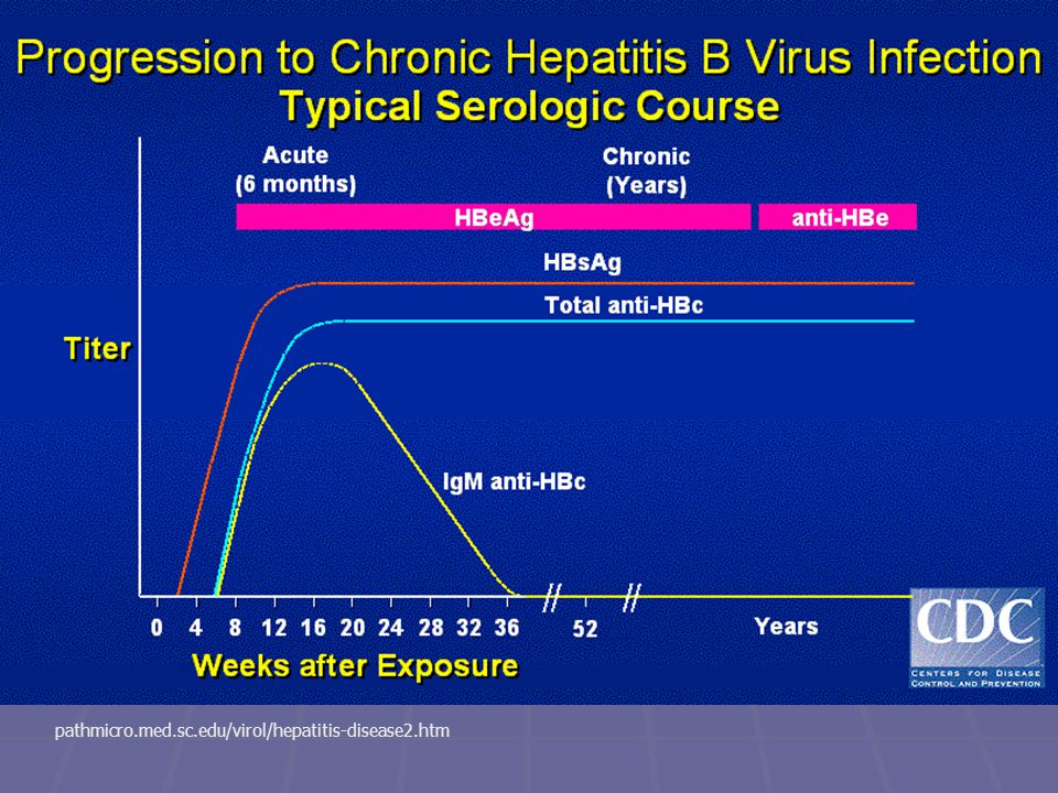 pathmicro.med.sc.edu/virol/hepatitis-disease2.htm