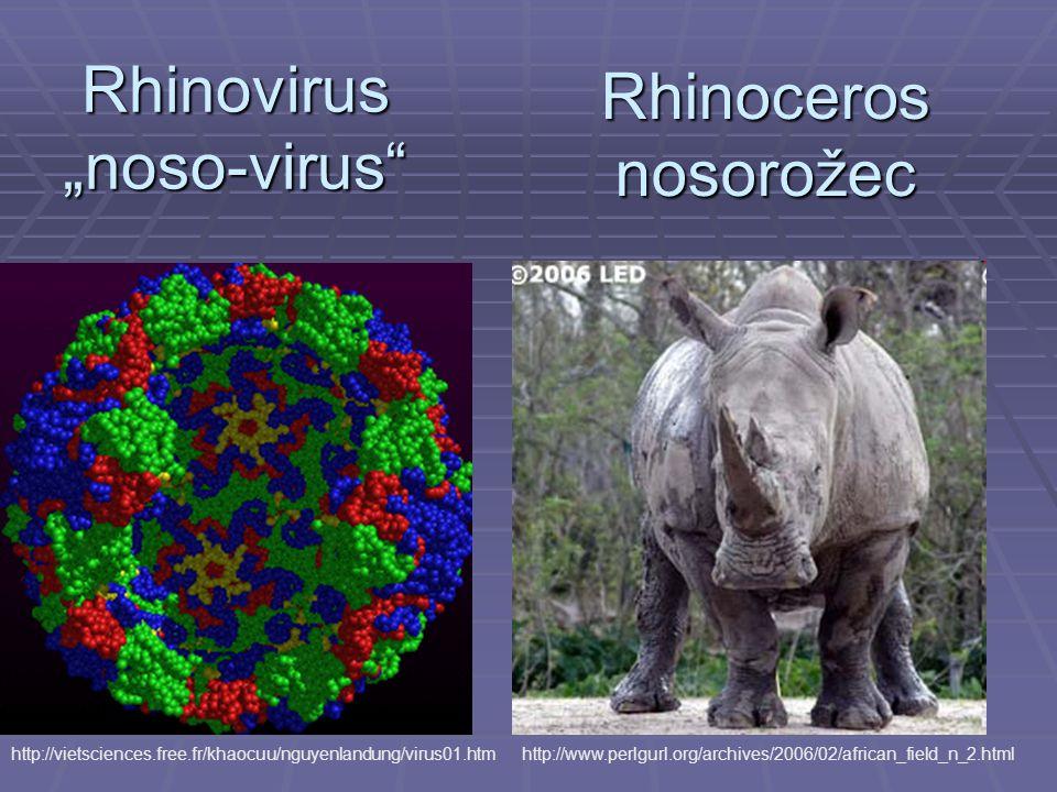 """Rhinovirus """"noso-virus"""