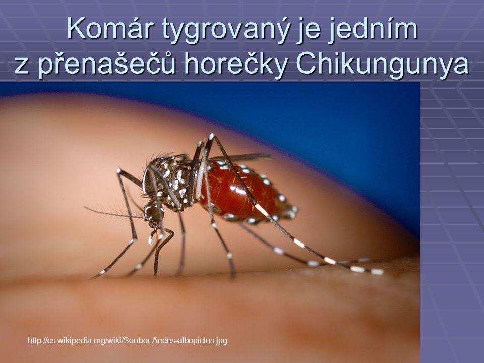 Komár tygrovaný je jedním z přenašečů horečky Chikungunya