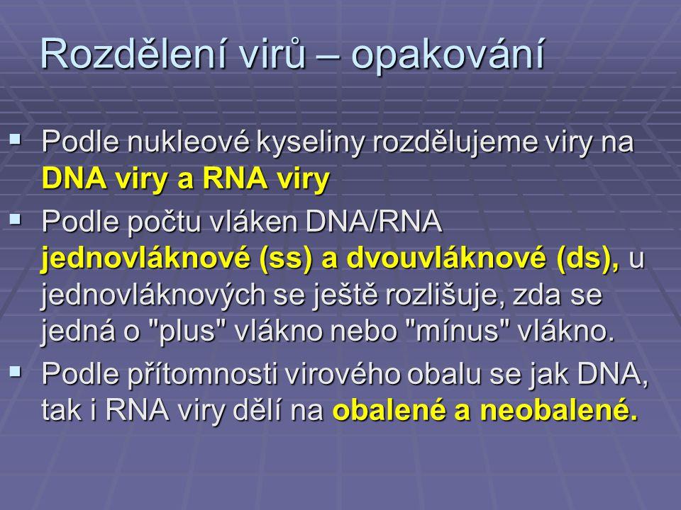 Rozdělení virů – opakování