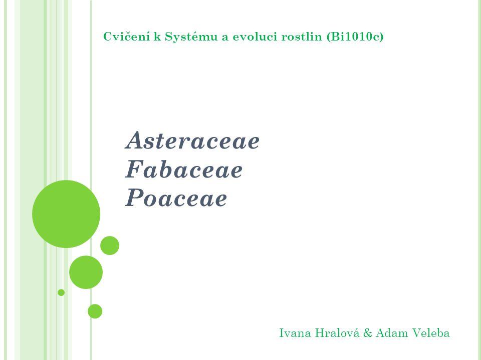 Asteraceae Fabaceae Poaceae