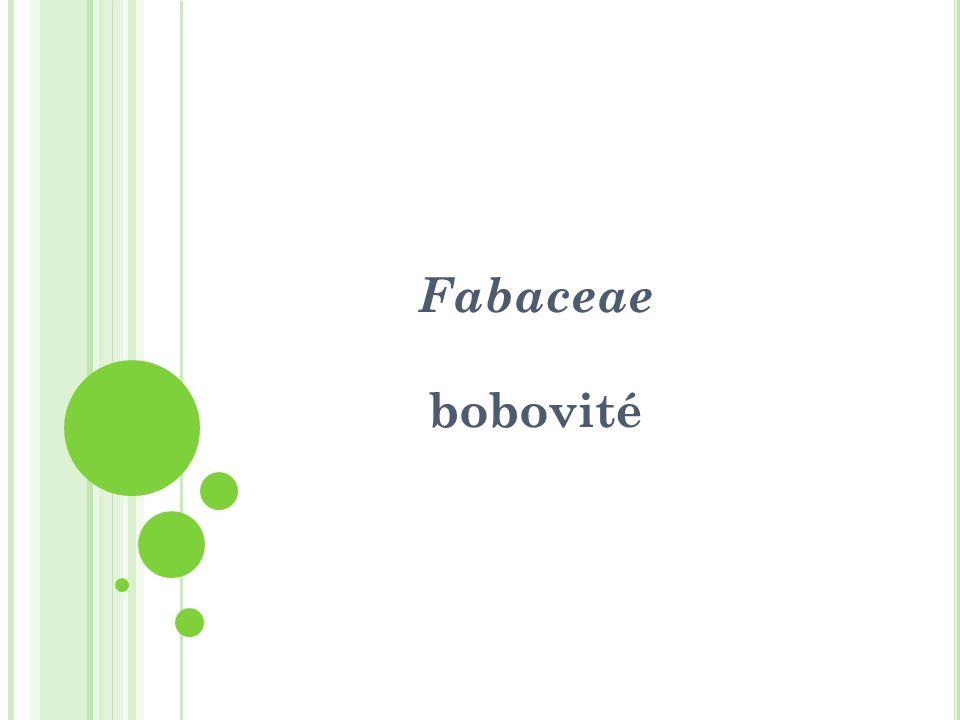 Fabaceae bobovité