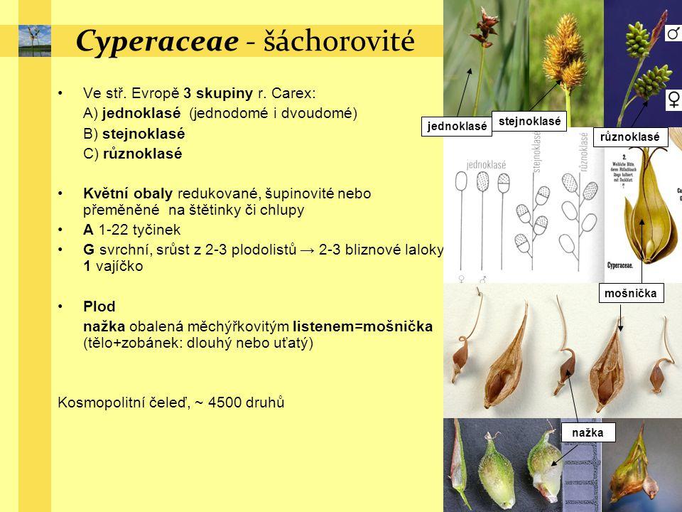 Cyperaceae - šáchorovité