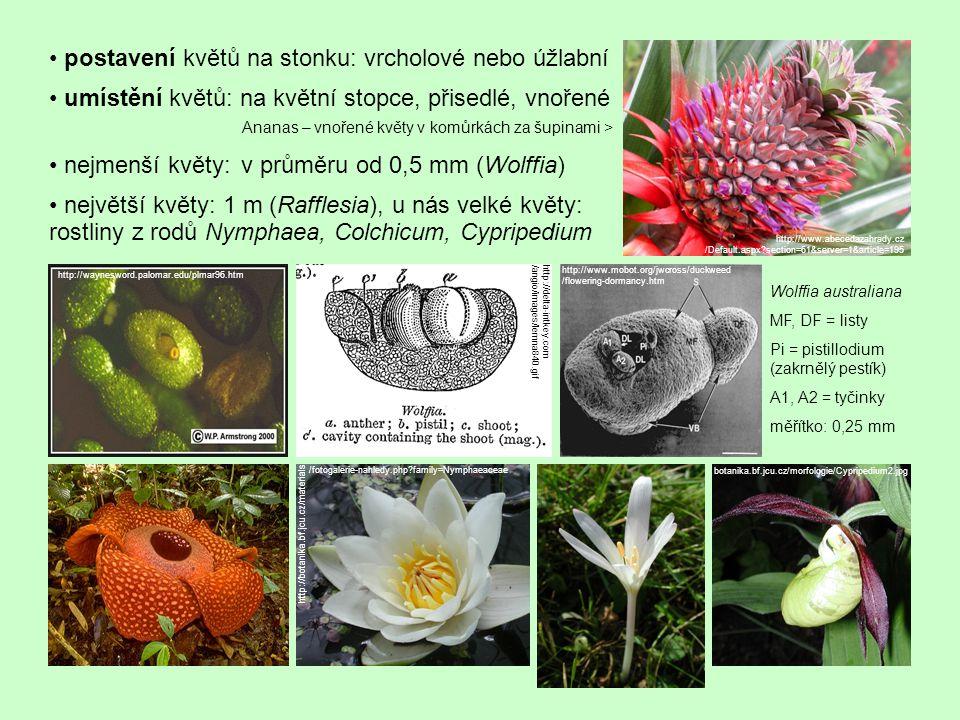 • postavení květů na stonku: vrcholové nebo úžlabní