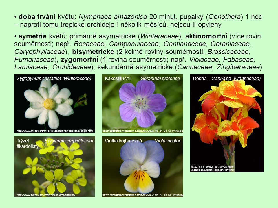 • doba trvání květu: Nymphaea amazonica 20 minut, pupalky (Oenothera) 1 noc – naproti tomu tropické orchideje i několik měsíců, nejsou-li opyleny