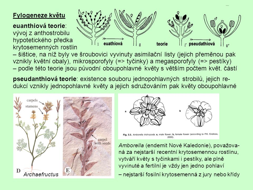 krytosemenných rostlin