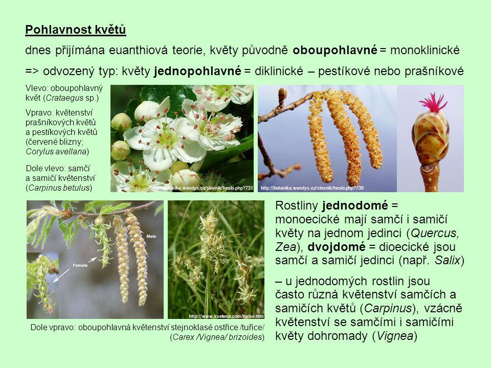 Pohlavnost květů dnes přijímána euanthiová teorie, květy původně oboupohlavné = monoklinické.