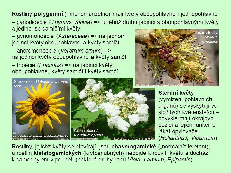 Rostliny polygamní (mnohomanželné) mají květy oboupohlavné i jednopohlavné