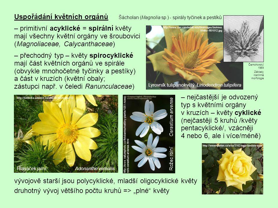 Uspořádání květních orgánů