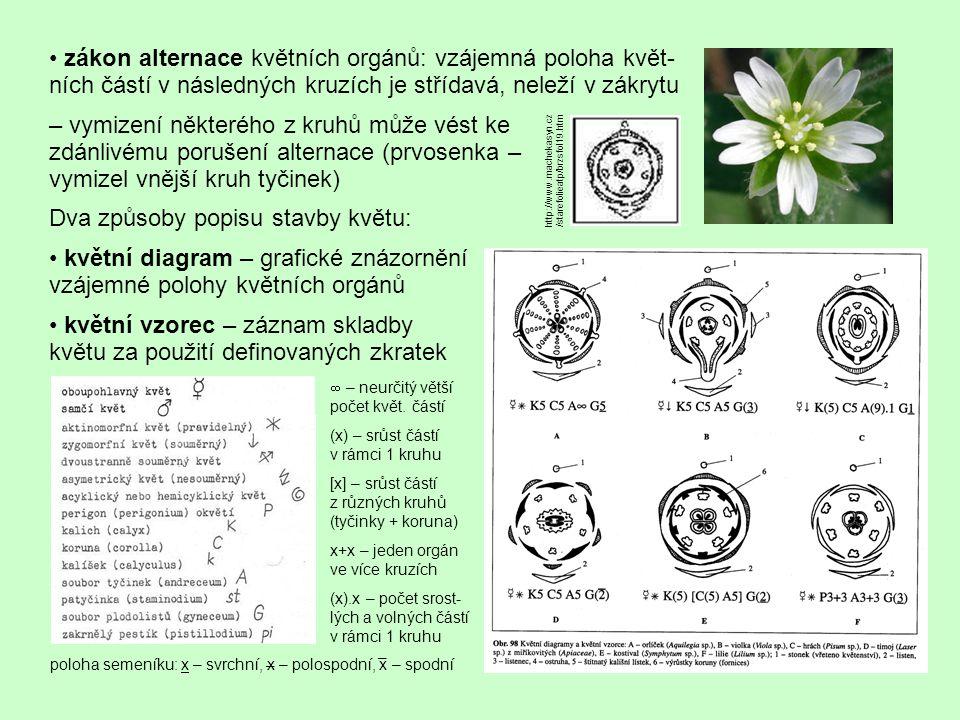 Dva způsoby popisu stavby květu: