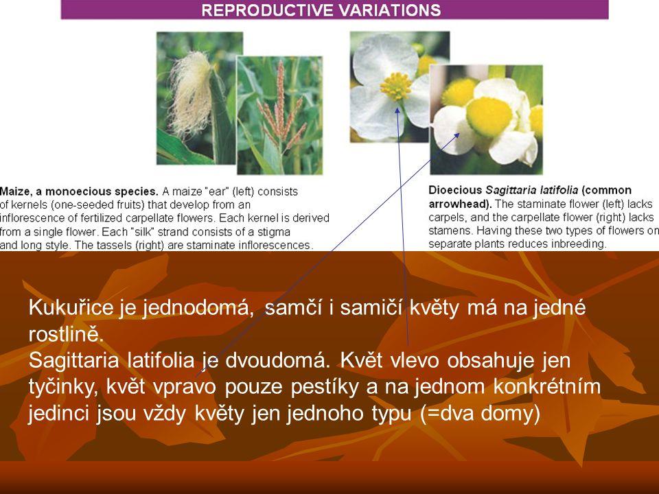 Kukuřice je jednodomá, samčí i samičí květy má na jedné rostlině.