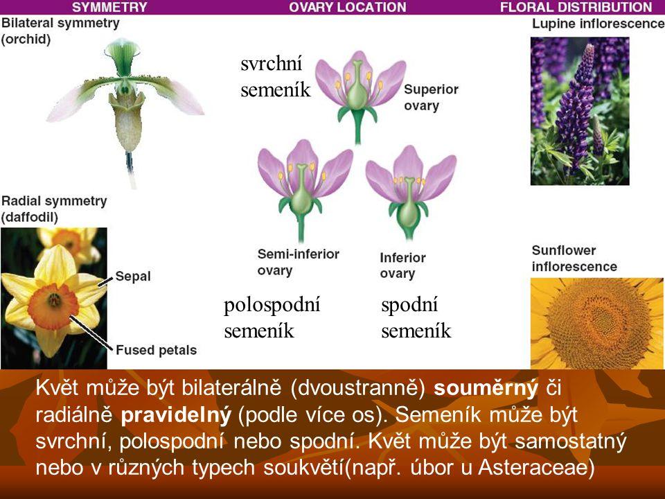 svrchní semeník. polospodní. semeník. spodní. semeník.
