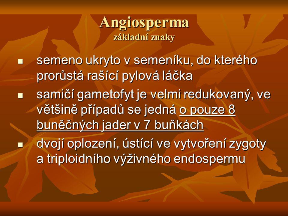 Angiosperma základní znaky
