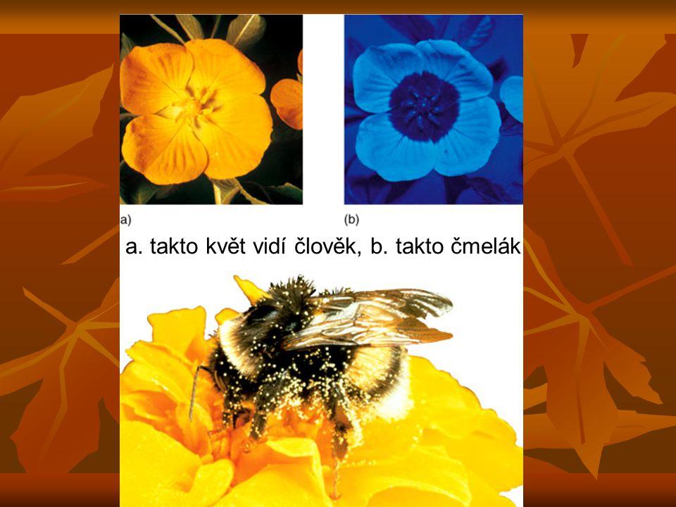 a. takto květ vidí člověk, b. takto čmelák