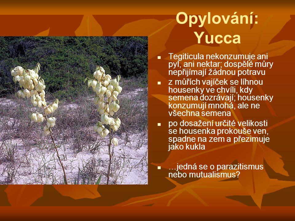 Opylování: Yucca Tegiticula nekonzumuje ani pyl, ani nektar; dospělé můry nepřijímají žádnou potravu.
