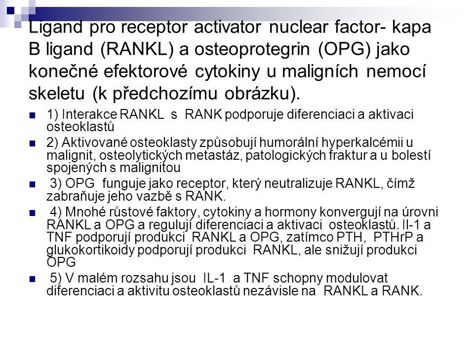 Ligand pro receptor activator nuclear factor- kapa B ligand (RANKL) a osteoprotegrin (OPG) jako konečné efektorové cytokiny u maligních nemocí skeletu (k předchozímu obrázku).
