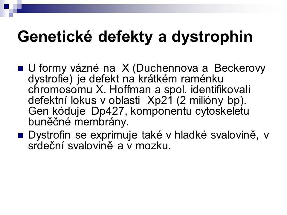 Genetické defekty a dystrophin
