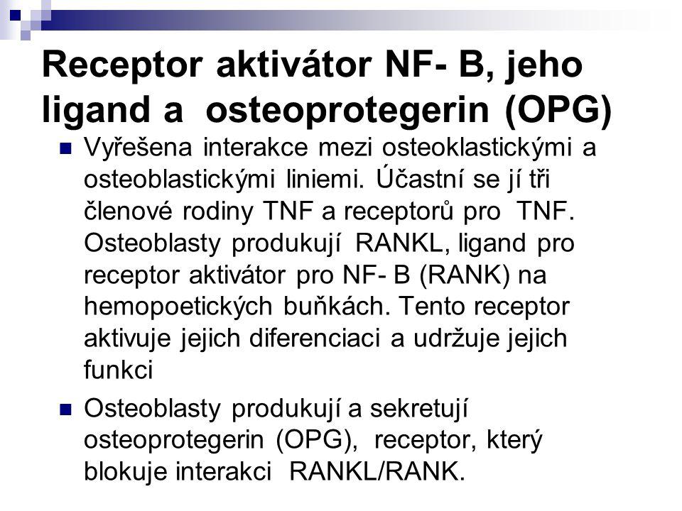 Receptor aktivátor NF- B, jeho ligand a osteoprotegerin (OPG)