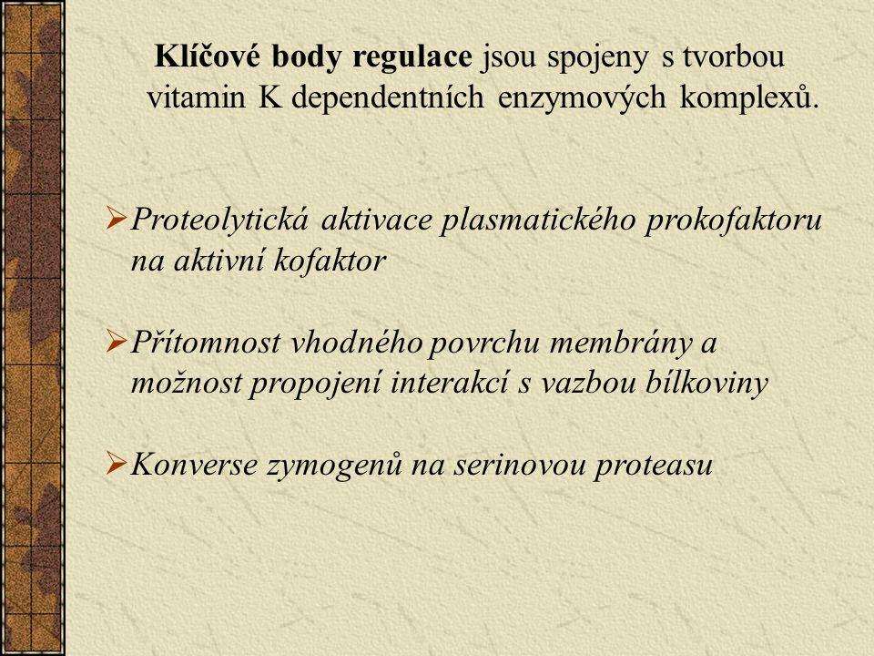 Klíčové body regulace jsou spojeny s tvorbou vitamin K dependentních enzymových komplexů.