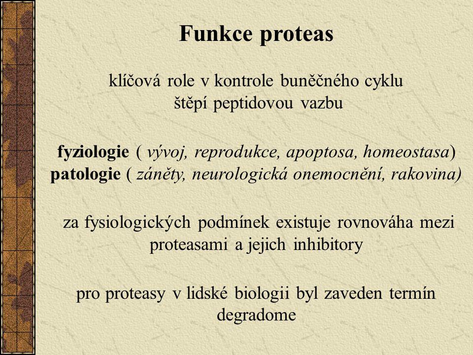 pro proteasy v lidské biologii byl zaveden termín degradome