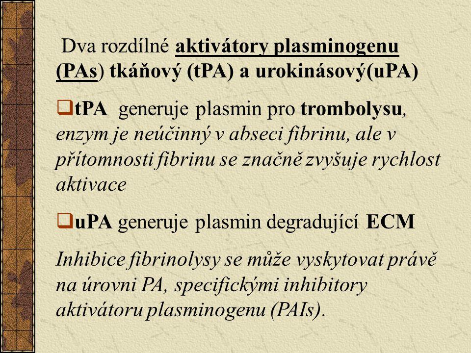 Dva rozdílné aktivátory plasminogenu (PAs) tkáňový (tPA) a urokinásový(uPA)