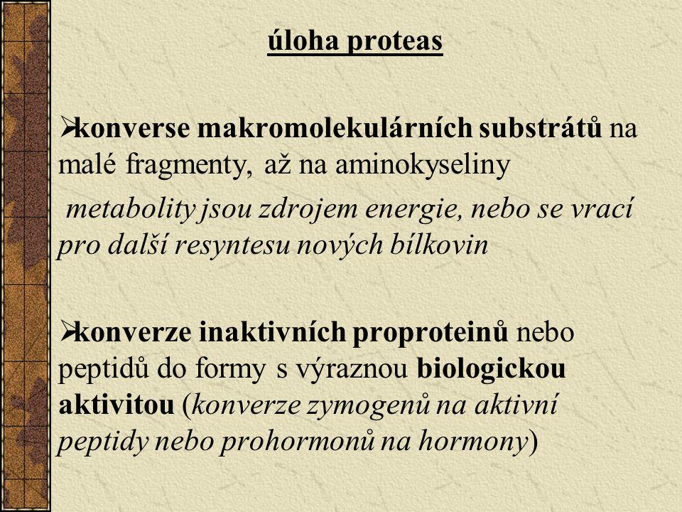 úloha proteas konverse makromolekulárních substrátů na malé fragmenty, až na aminokyseliny.